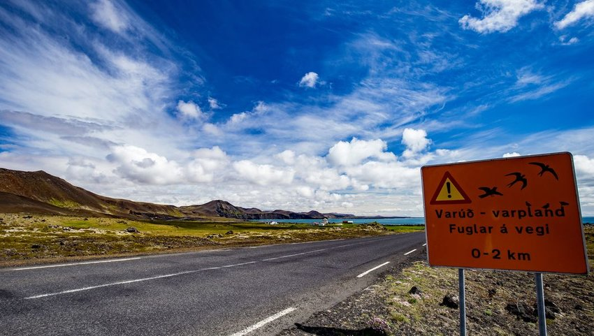 Icelandic warning sign for migrating birds, Ring Road, southern coast of Iceland