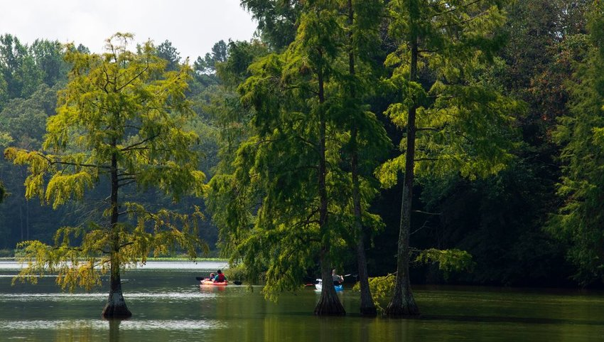 People kayaking in the water beneath trees