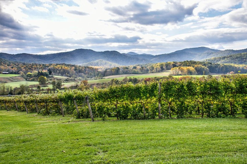 Vineyard in Virginia with fall colors in background and hills
