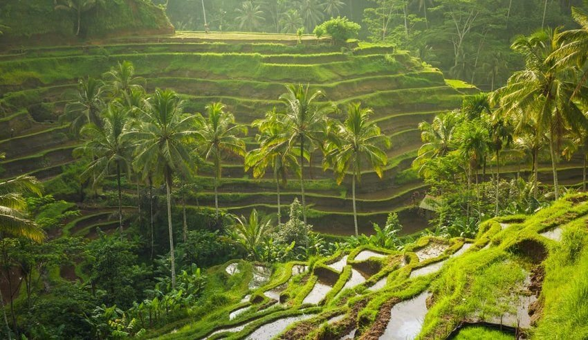 5 Rice Terraces in Asia You Have to See to Believe
