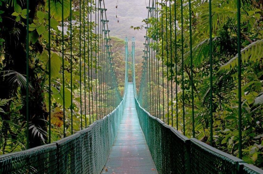 Hanging Bridge, Monteverde Cloud Forest, Costa Rica