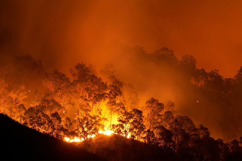 Australia's Bushfires Are Still Burning — Here's How to Help
