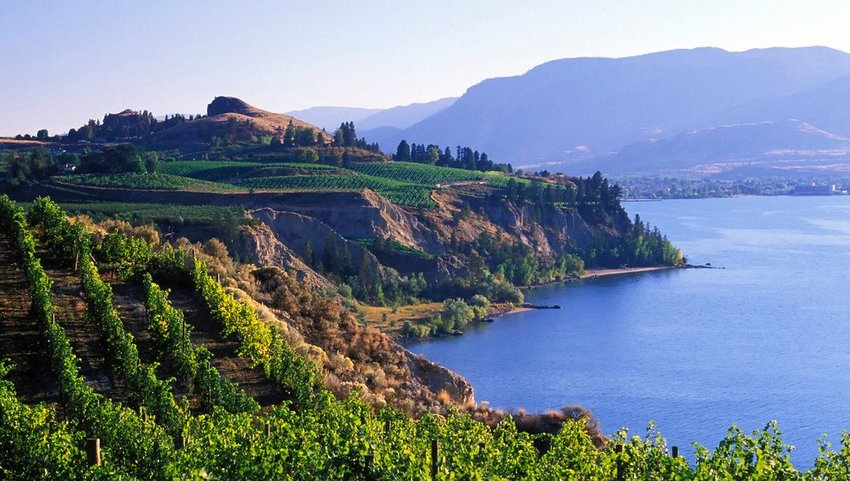 Vineyard on coast of water