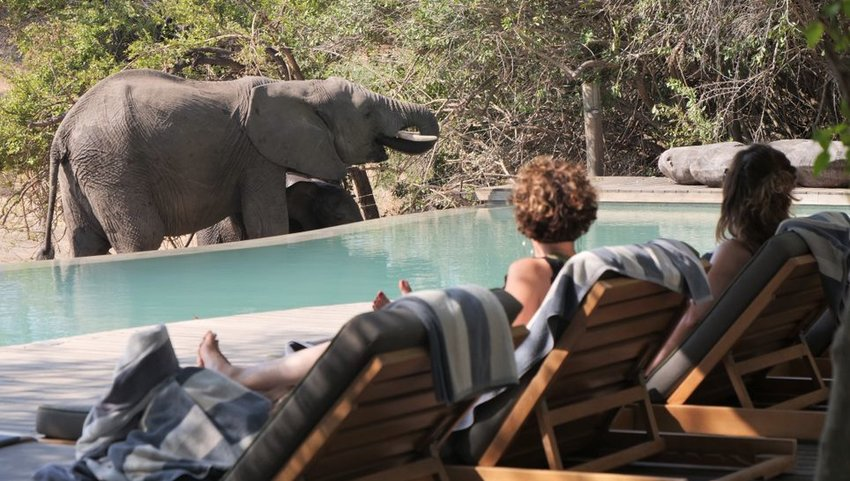 Elephants standing next to a pool where two people sit on lounge chairs