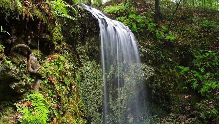 Waterfall surrounded by green foliage
