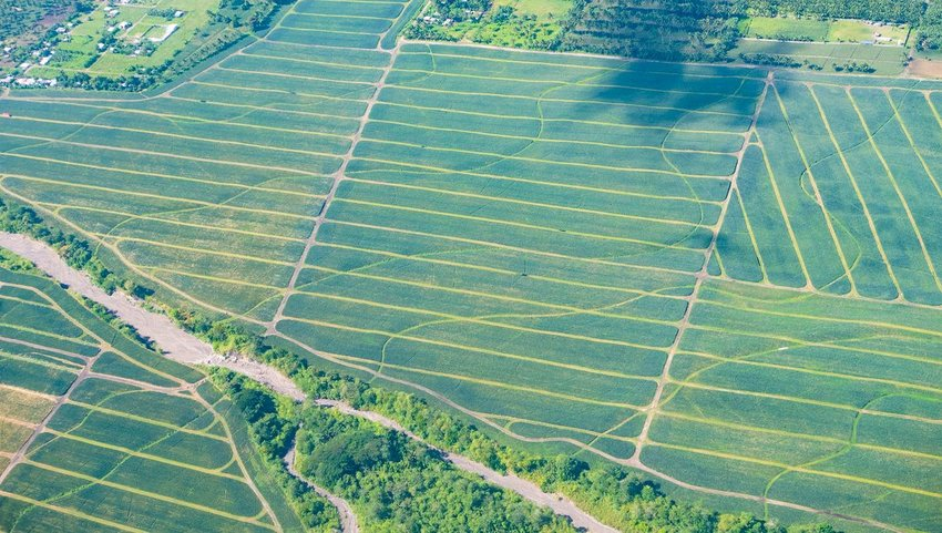 Aerial view of pineapple plantations in the Philippines