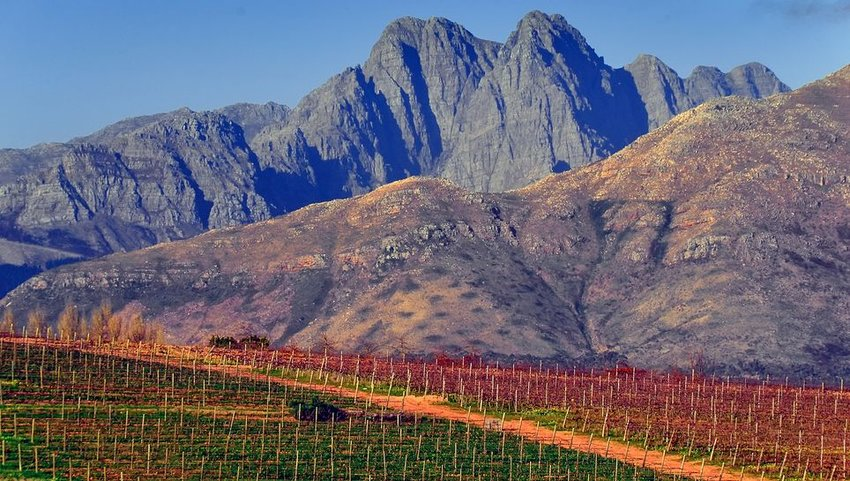 Vineyard with mountains in background in South Africa