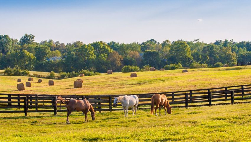 Horse ranch with trees in the background