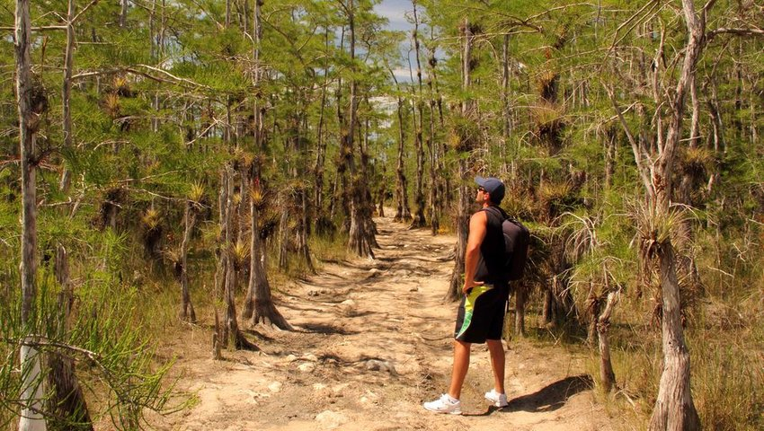 Person hiking in Big Cypress National Preserve, FL
