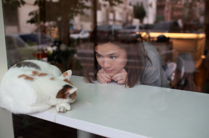 Cat cafe in Japan