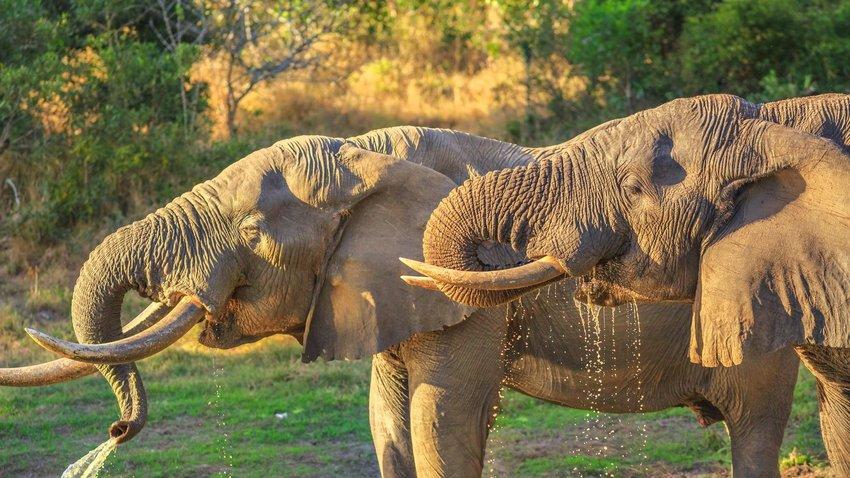 Tembe Elephant Park, KwaZulu-Natal, South Africa
