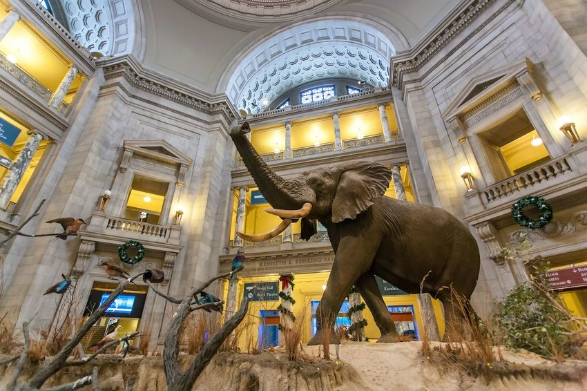 The Smithsonian National Museum of Natural History | Photo: Tinnaporn Sathapornnanont