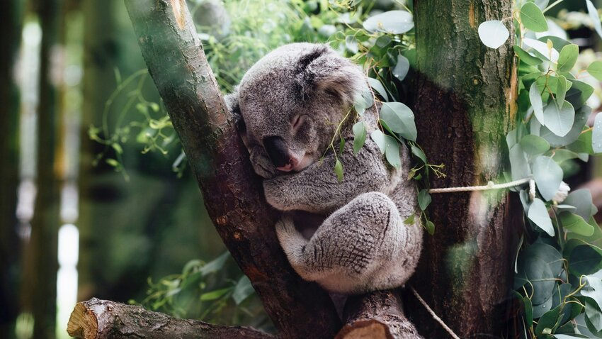 How To Skip the Zoo And Spot Australian Wildlife In Nature