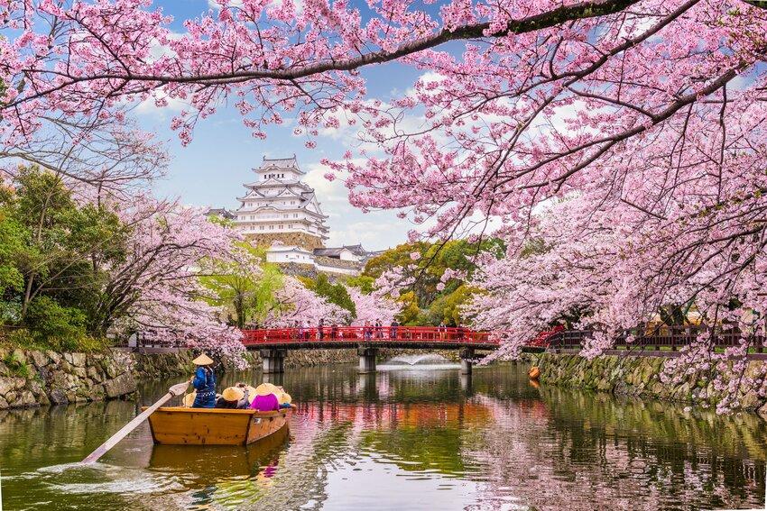 How to Celebrate Sakura Locally This Year